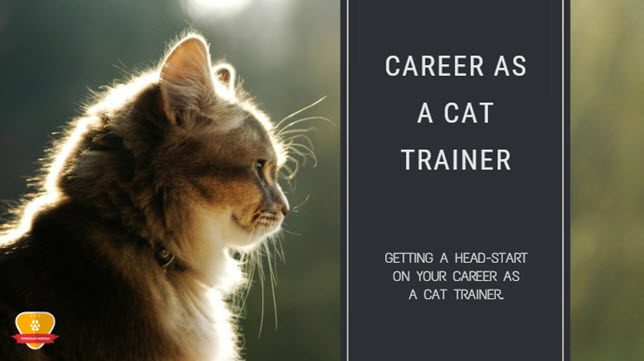 cat training career