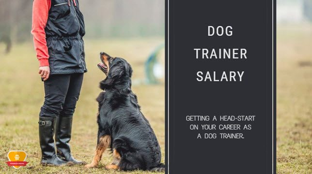 dog trainer salary