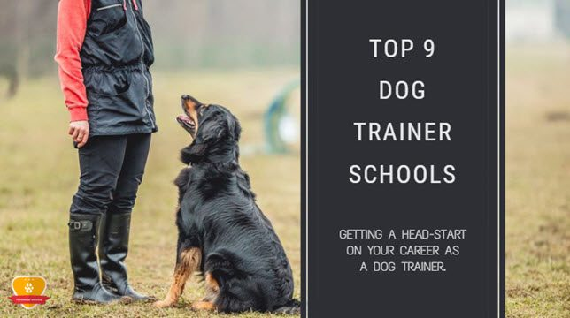 top 9 dog trainer schools for 2018 * choose wisely!