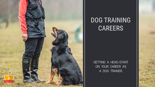Dog Training Careers
