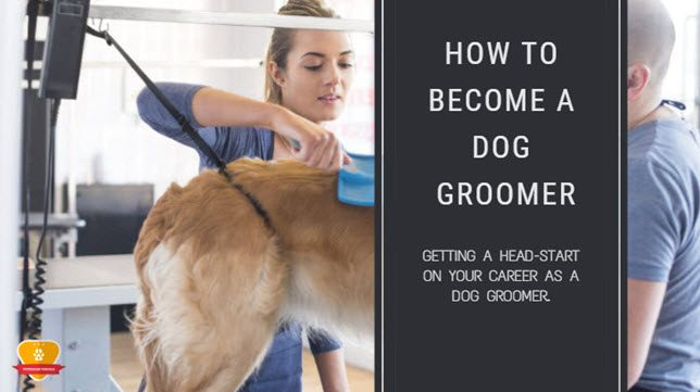 How to Become a Dog/Pet Groomer