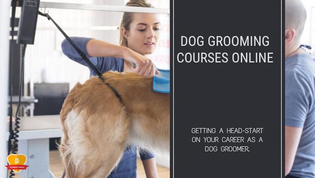 Dog Grooming Courses Online