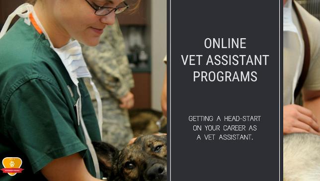 Online Vet Assistant Programs