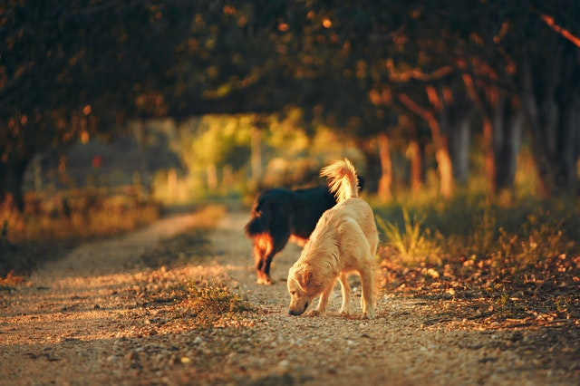 Dogs sniffing, dogs high smell sense