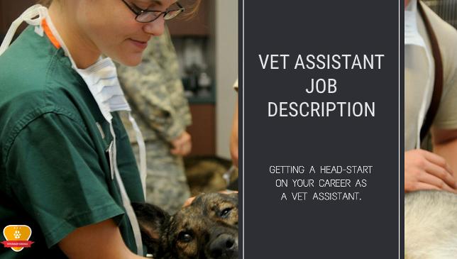 Vet Assistant Job Description